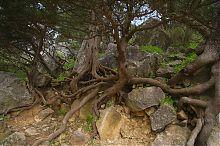 Суничник на Царській стежці між Лівадією і Ореандою