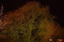 Краски ночи на набережной Ялты