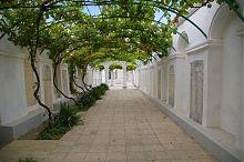 Виноградный дворик комплекса караимских кенас Евпартии