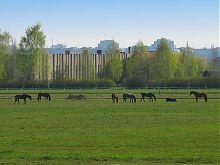 Поле ипподрома во Львове