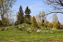 Альпійська гірка дендропарку у Білокриниці