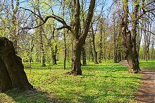 Вишневецкий парк