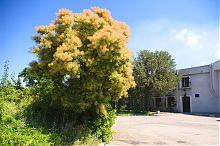 Хортицький Музей історії Запорізького козацтва