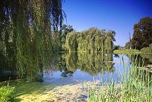 Ставок на річці Чорна Руда в Андрушівському парку