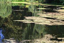 Андрушевская река Черная Руда