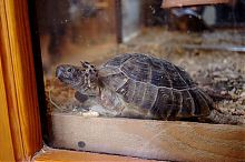 Черепаха в докучаевском террариуме