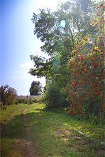 Терещенківський сад поруч з палацом в Червоному