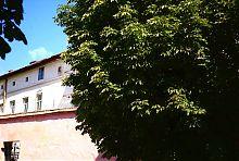 Госпиталь сестер милосердия св. Винцента во Львове