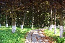 Боковая аллея Верховнянского парка Ганских
