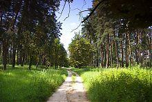 Каштанова алея Натальївську парку