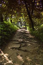 Дорожка Краснокутского дендропарка