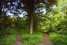 Аллеи парка Шидловских в Старом Мерчике