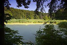Нижний пруд парка в Старом Мерчике