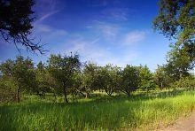 Яблоневый сад Гиевского парка (Люботин)