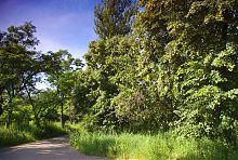 Під'їзна алея Гиївського  парку в Люботині