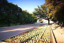 Центральная аллея бывшего харьковского Университетского сада