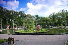 Контрастна хвойна галявина в харківському парку ім. Максима Горького