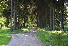 Центральная подъездная аллея усадебного парка в Голобах