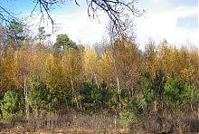 Молодая поросль Великоанадольского леса