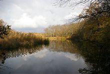 Парковый пруд Великоанадольского леса