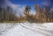 Степові ділянки Святогірського лісу