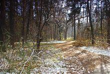 Просіка Святогірського лісу