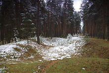 Святогірський ліс на правому березі Сіверського Дінця