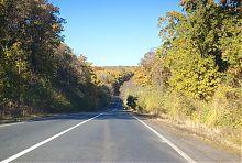 Ліс в Святогір'я