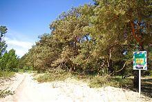 Тополина-соснова ділянка Меотиди (с. Юр'ївка)