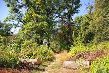 Доріжка П'ятничанського парку