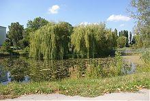 Романтичний дворцовый пруд с остовком в Дунаевцах