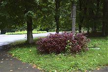 Вінницький ботанічний сад