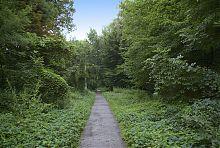 Алея ботанічного саду Вінниці