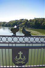 Голуби на П'ятничанському мосту Вінниці