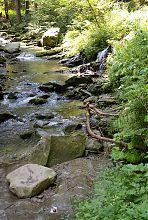 Кам'яне русло річки Жонка