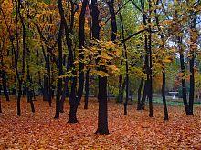 Квіткова чаша в парку ім.О.С.Щербакова Донецька