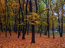 Цветочная чаша в парке им.А.С.Щербакова Донецка