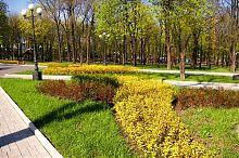 Аллея парка им.А.С.Щербакова в Донецке