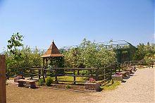 Флора зоопарку Сафарі в Бердянську