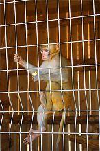 Макака зоопарку Сафарі в Бердянську