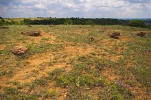 Долина каменных деревьев в ландшафтном парке Клебан-Бык Александро-Калиново