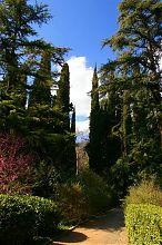 Алея ботанічного саду в Нікіті