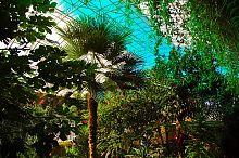 Общий вид оранжереи в Докучаевске