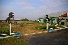 Внутренний двор мангушской конефермы