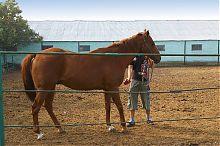 Чистка лошади на мангушской конеферме
