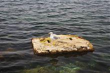 Мартын Севастопольской бухты
